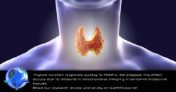 Magnetic Therapy for Thyroid: PEMF Therapy Research & Studies