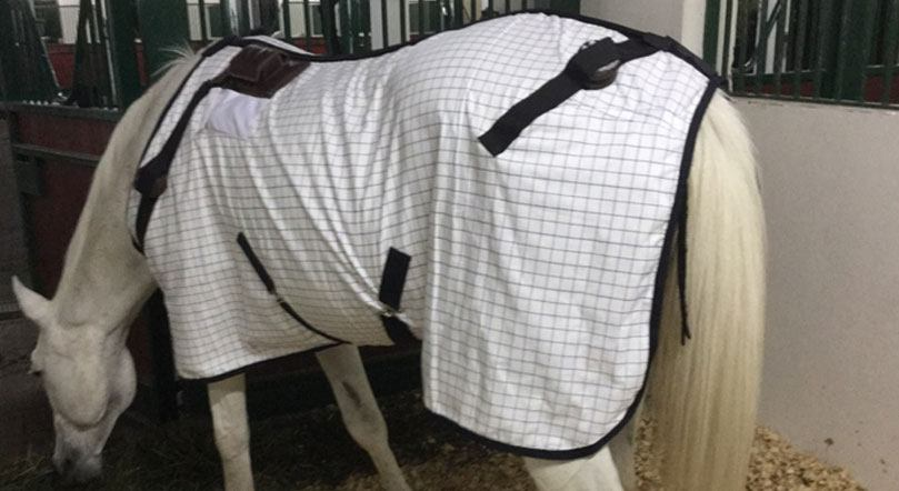 pemf machine for horses