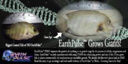 Growing Giants with EarthPulse™