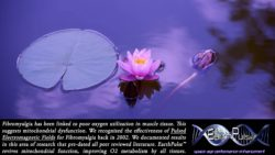 Fibromyalgia – Pulsed Electromagnetic Field PEMF & rTMS Therapy Research Bibliography